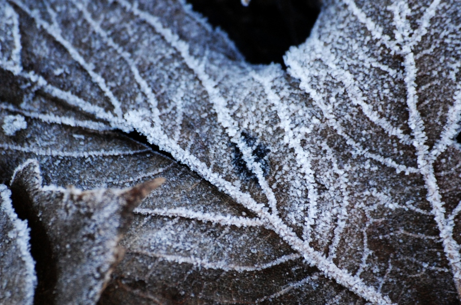 Frost on a dead leaf.