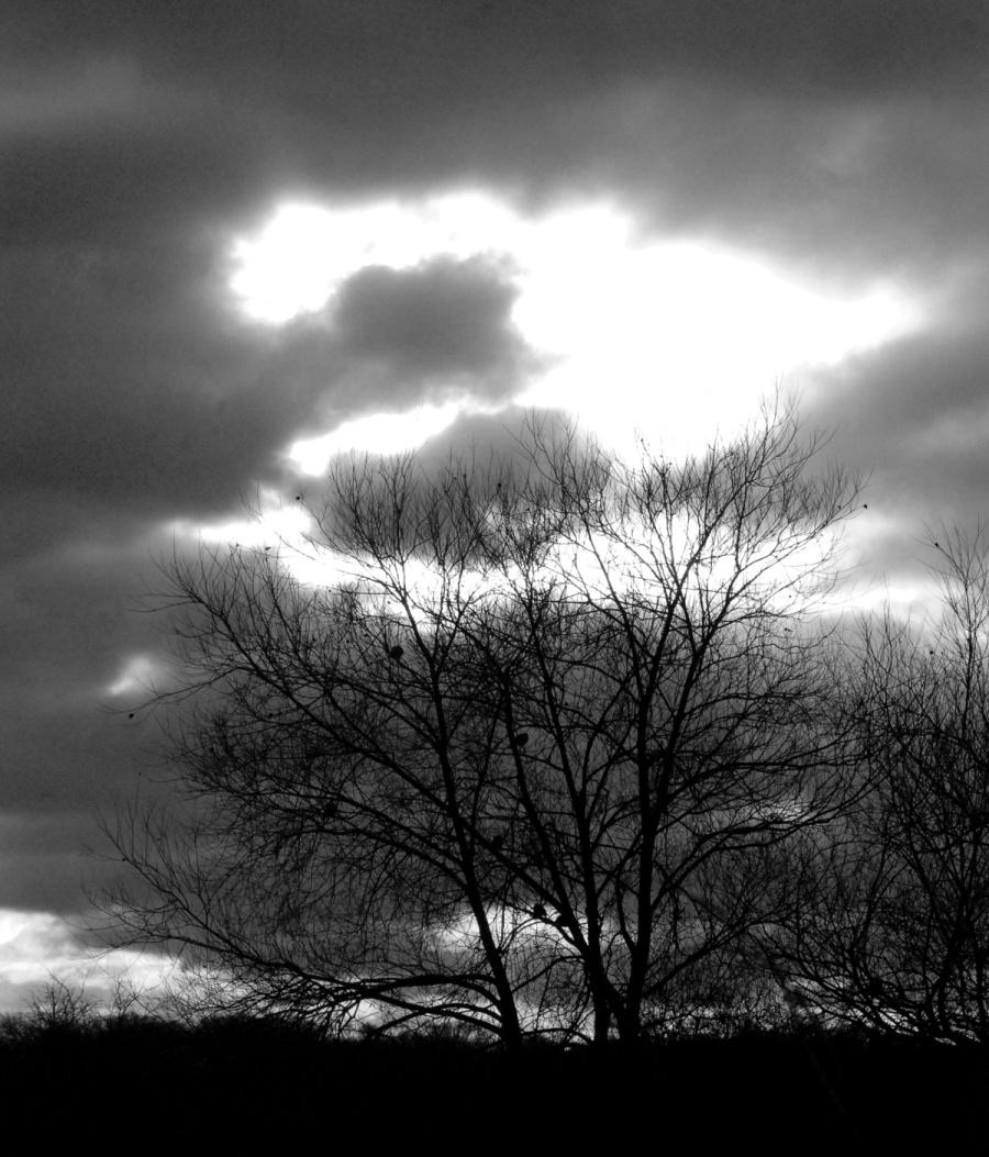 Sky ... tree.