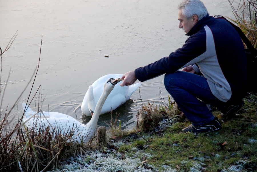Polish(?) guy feeding swans.