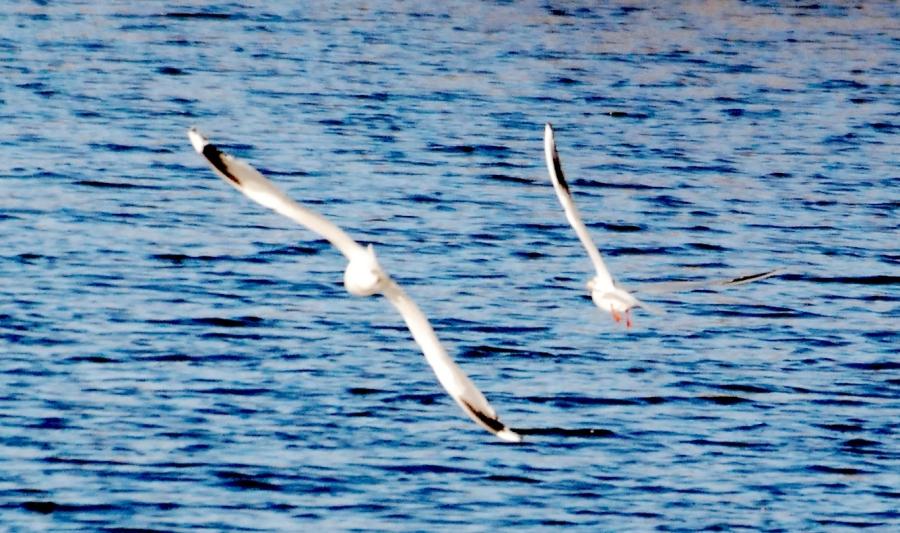 29:11:40:13 Gulls
