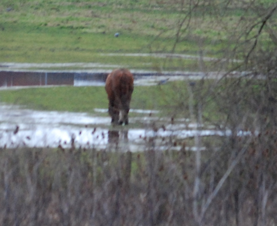 This field has been flooded for months now. The horse looks miserable to me.