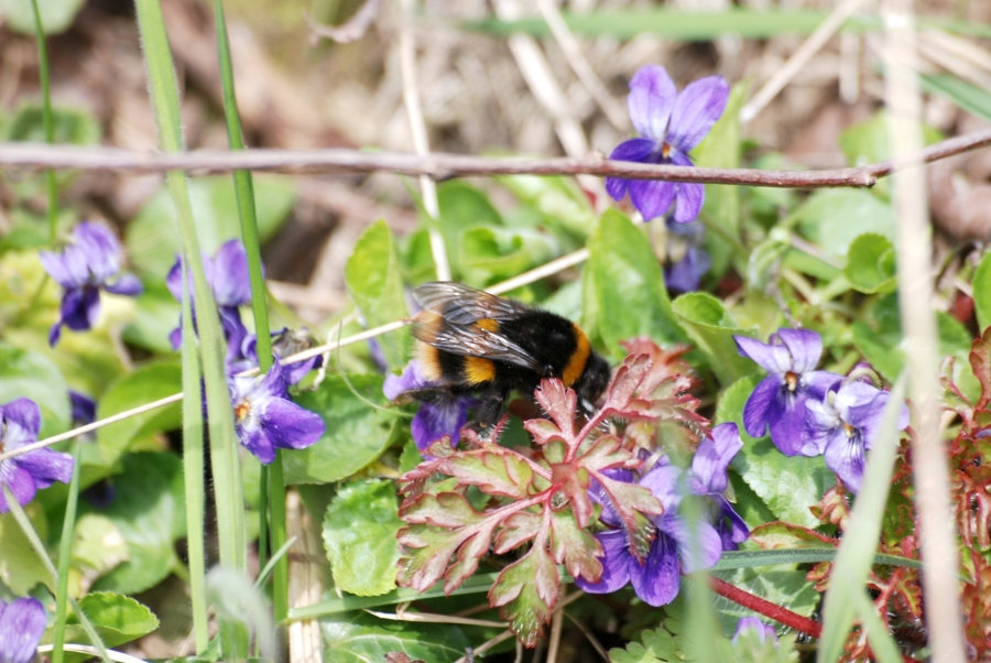 One of the first bees of the year