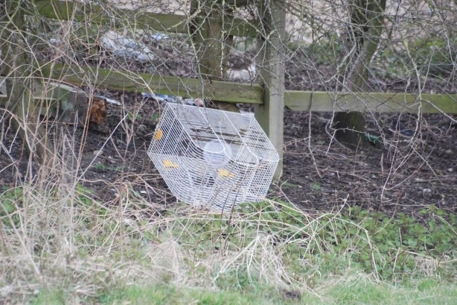 Dumped bird cage
