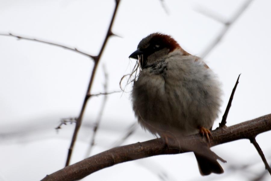 A fluffy nest builder