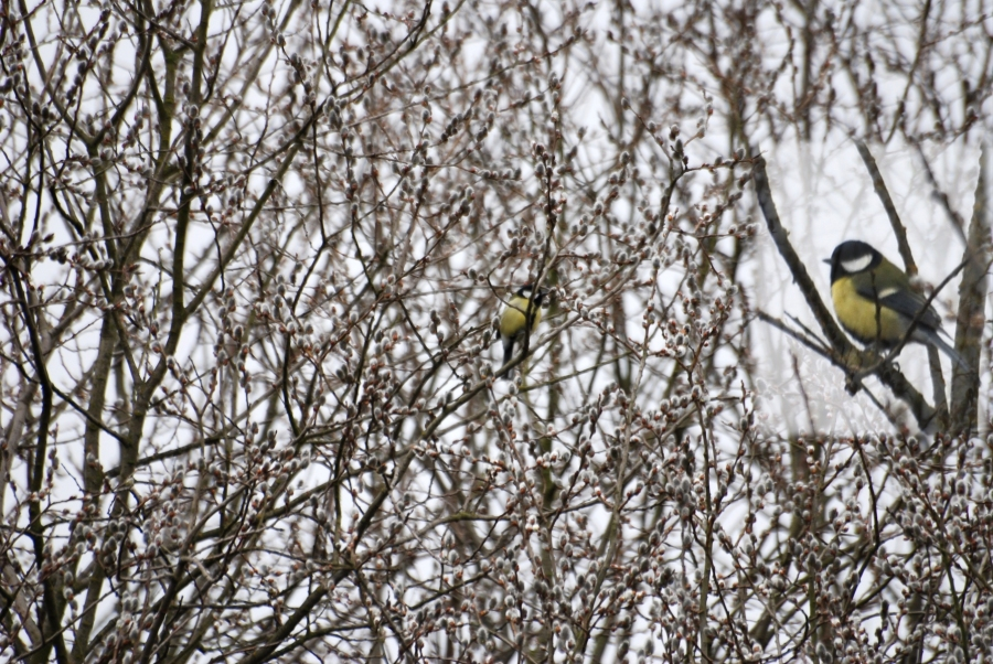 The tracery of the willow or the bluetit, take your pick.