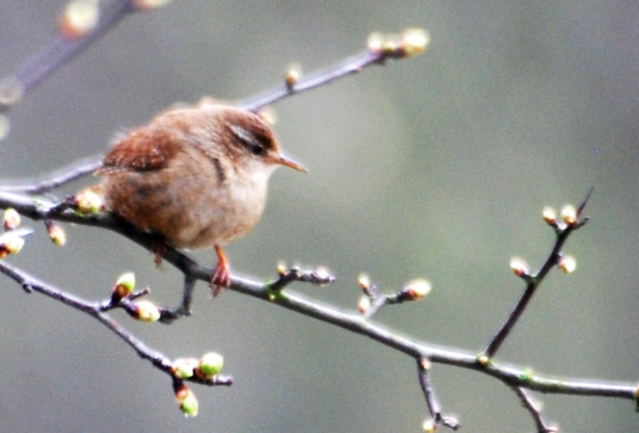 Finish the day with an elusive wren