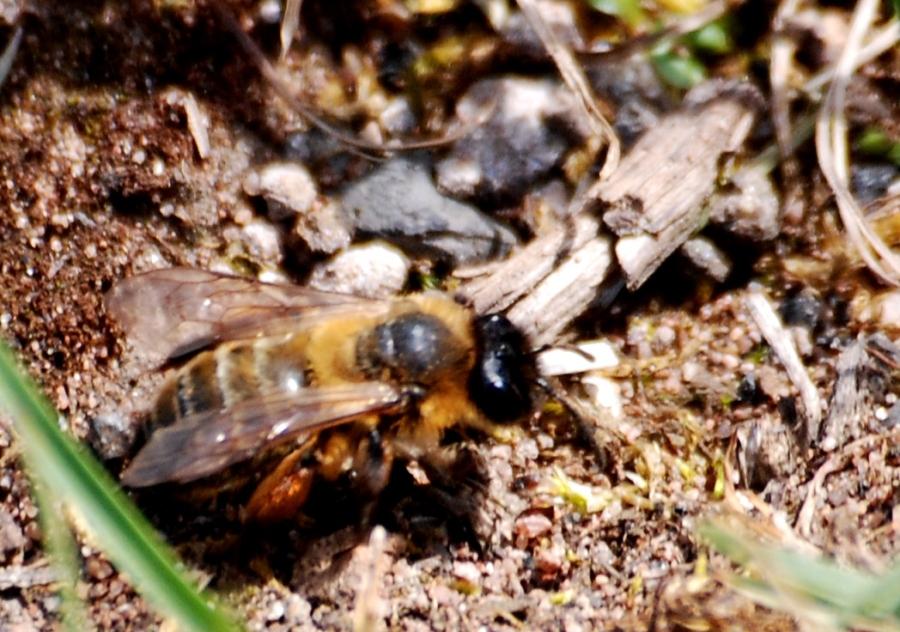 Bee56