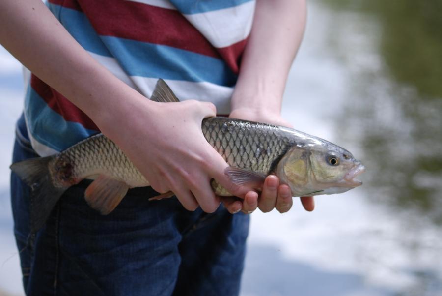 CatchFish
