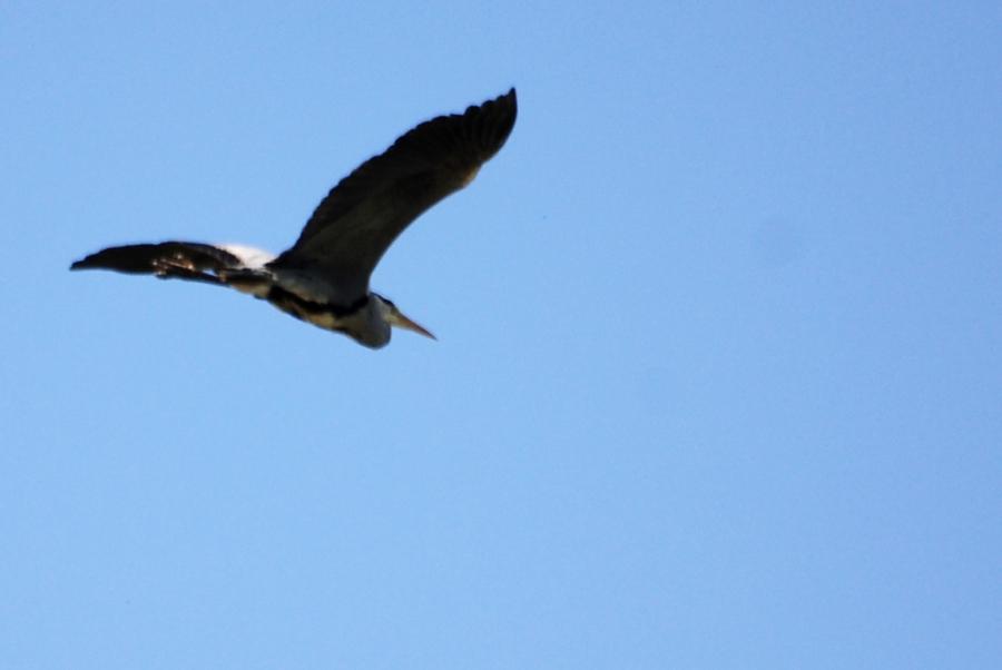HeronOff