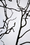 This is a goldfinch at a distance