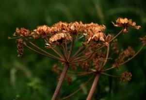Seed head.