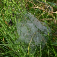 Spider and web.
