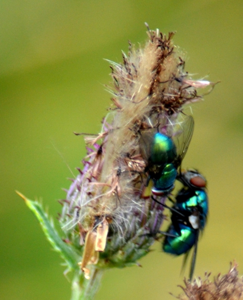 Fly meet fly