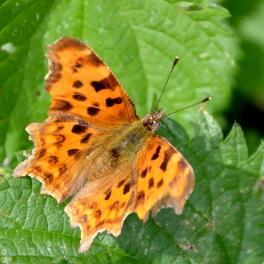 On bramble leaf