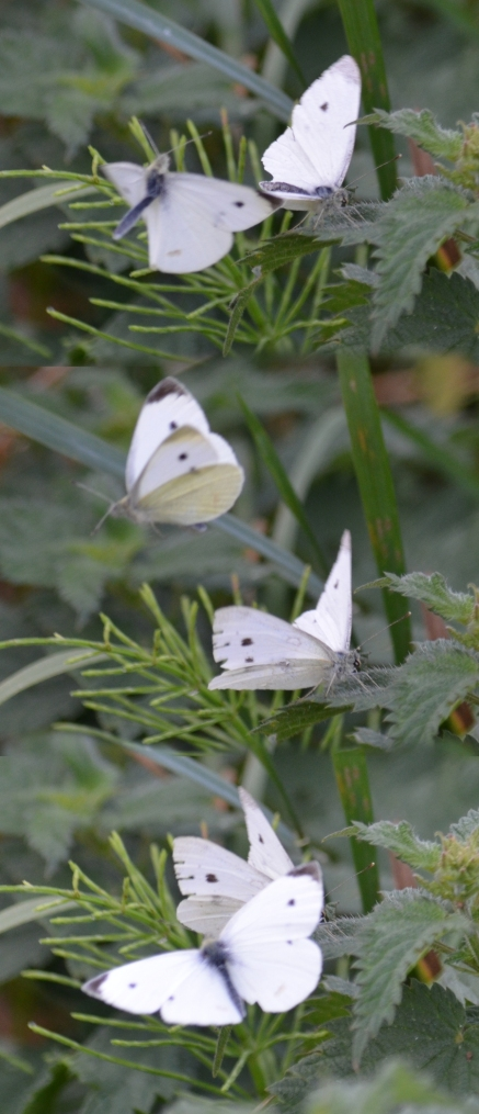 Small whites (shopped)