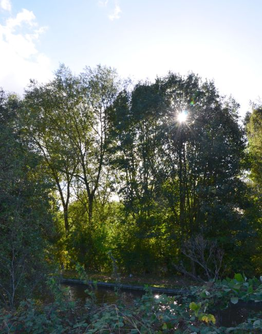 Sun through trees across the canal