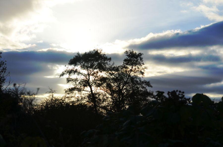 DSCw_0611Trees