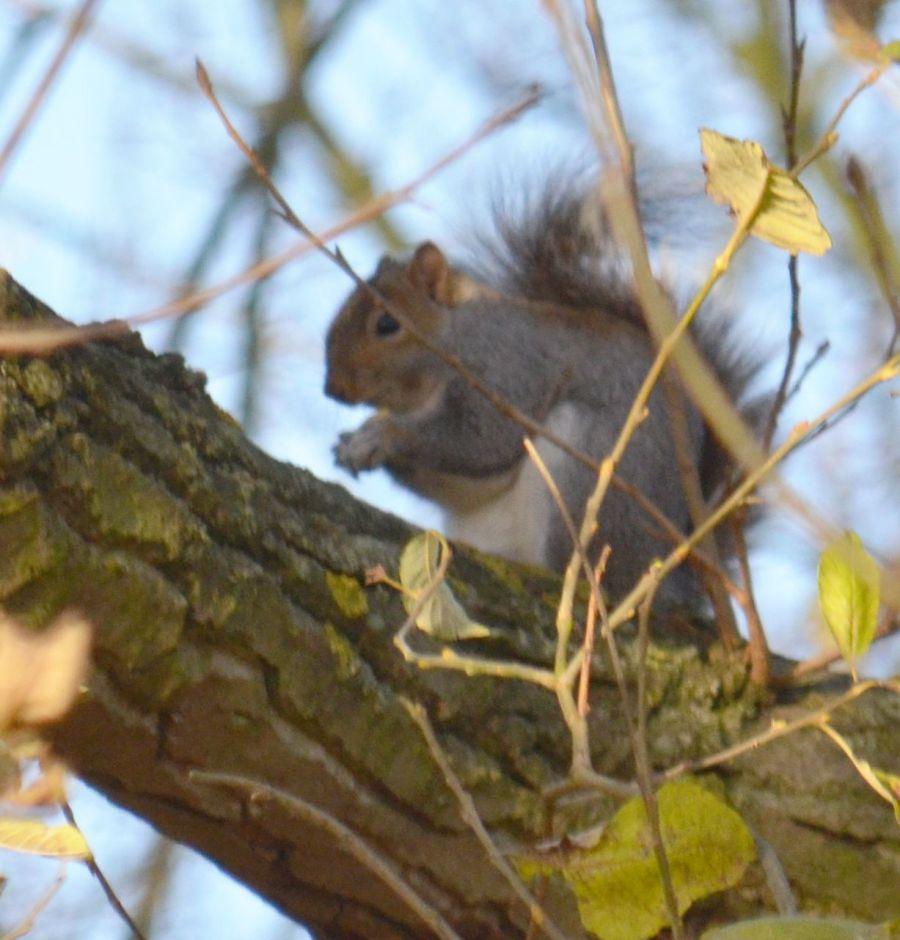 DSC_3382Squirrel