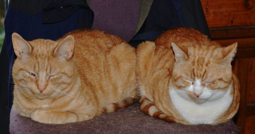 Two gingers