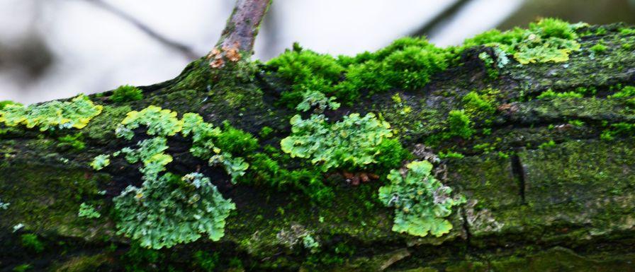 Lichen andmoss