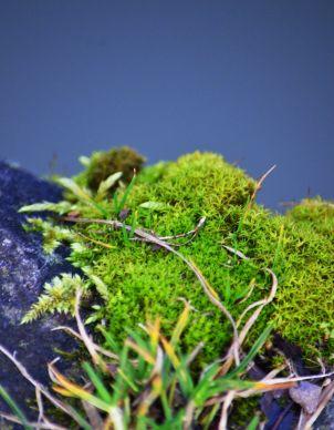 Another moss garden