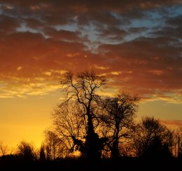 Tree against the sunrise