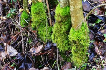 Moss socks