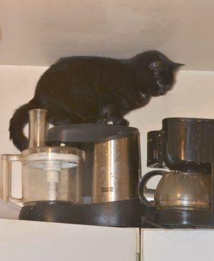 Idiot cat