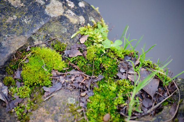Moss on canal bank