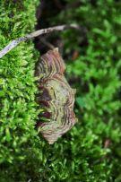 Moss, fungus