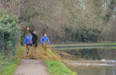 Clearing fallen willow from the canal