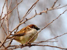 The sparrow tree