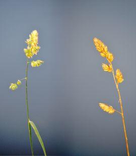 Grass (composite)