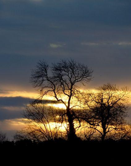 Winter tree against the sun