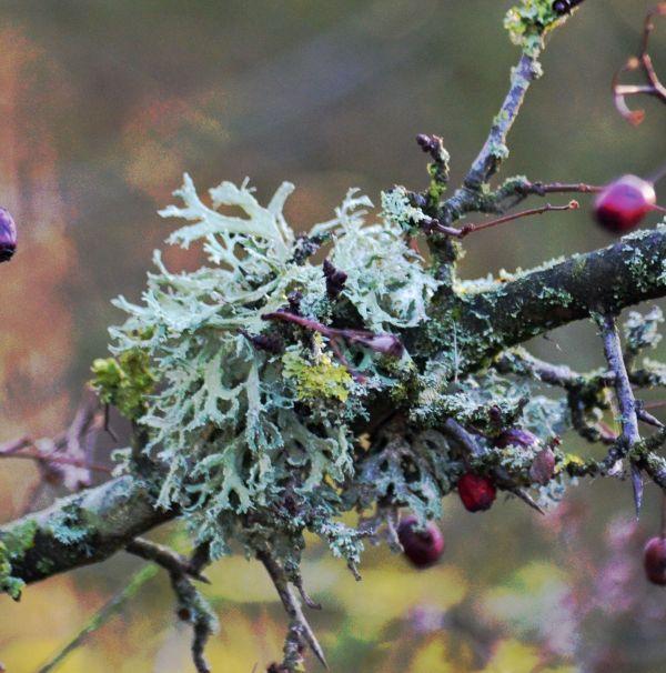 Lichen - my favourite clump