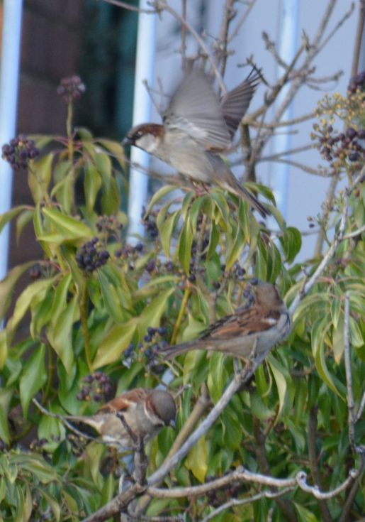 ... with sparrows