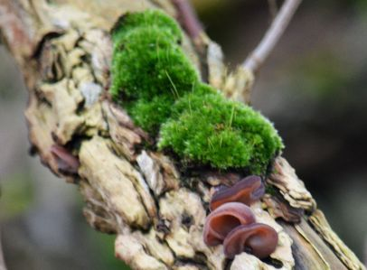 Moss and fungus at Branclifffe
