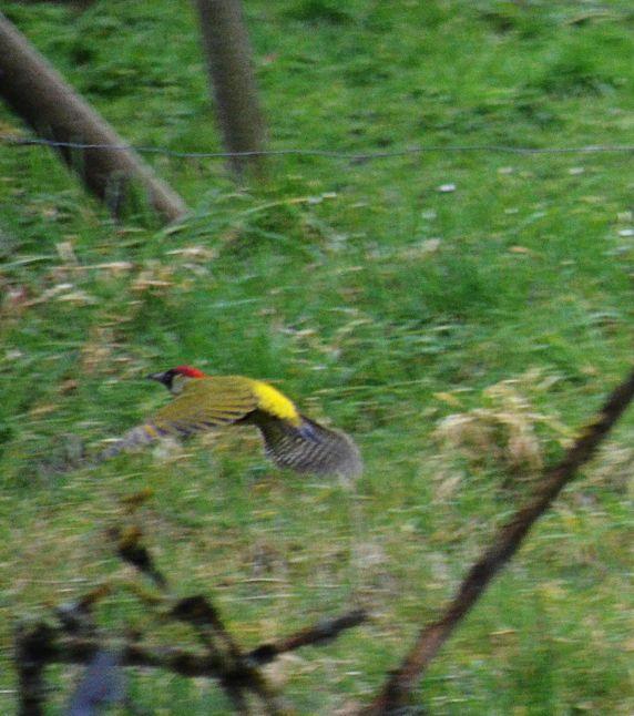 Woodpecker doin' the buggerin' off