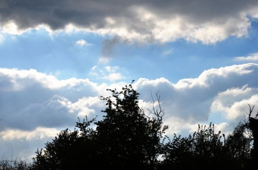 Skyscape with a chaffinch