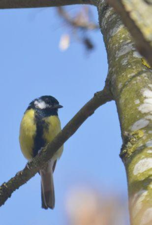 Lovely little birds