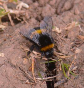 Investigative bee