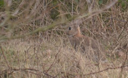 On Shireoaks Woodland (tip