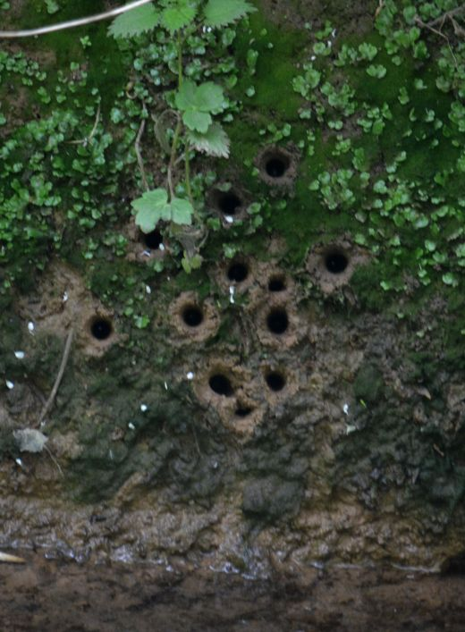 What makes holes like this?