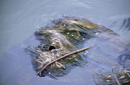 Water log