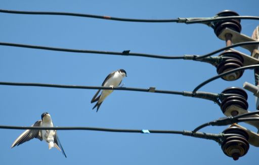 Birds n the wire