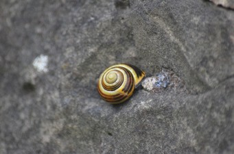 Snail on a wall