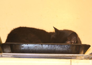 For a while Squeak took to sleeping on top of the kitchen cupboards