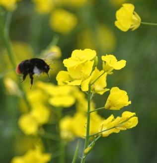 Look at the proboscis on that bee!
