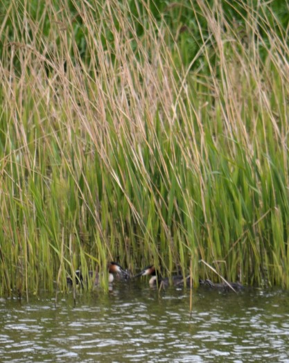 With the kids in the reeds