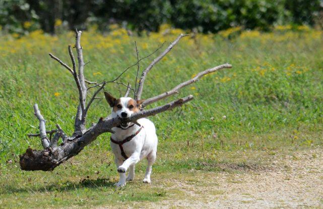 Bringing me a tiny stick